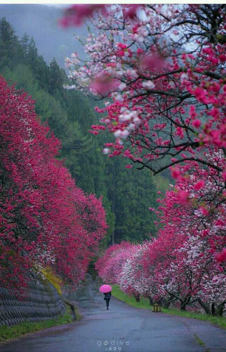 Nature Photography - godine 2000 - ShareChat