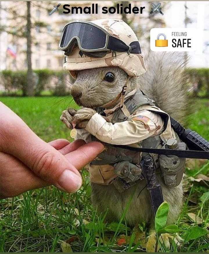 Safe Drive - Small solider FEELING SAFE - ShareChat