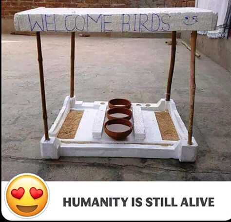 Save Birds Save Life - WELCOME BIRDS S HUMANITY IS STILL ALIVE - ShareChat