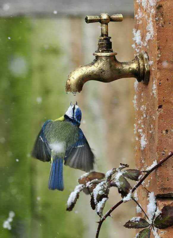 Save Water Save Bird - ShareChat