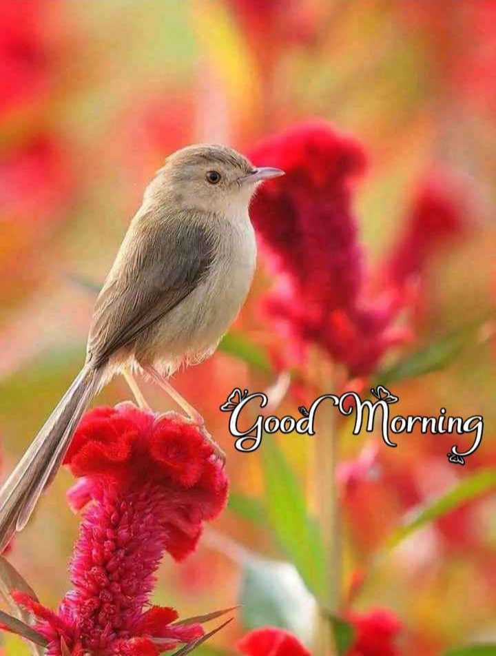 🎥WhatsApp वीडियो - Good Morning AN - ShareChat