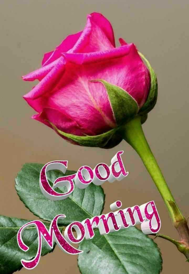 🎵WhatsApp स्टेटस सोंग्स - Good Morning - ShareChat