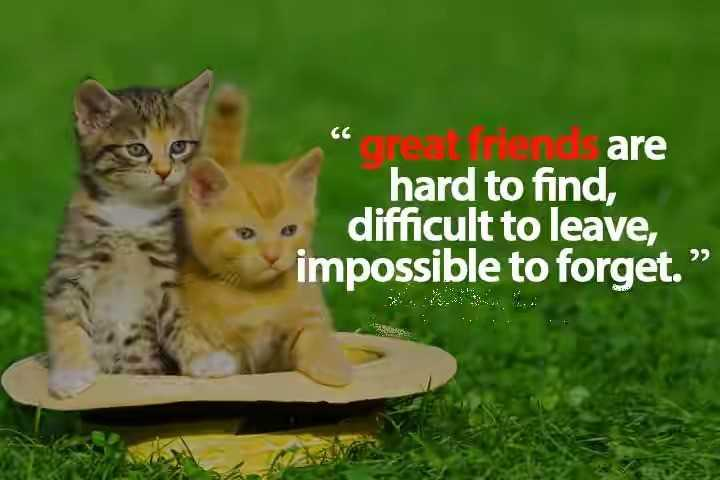 """📜 Whatsapp स्टेटस - """" ceat friend are hard to find , difficult to leave , impossible to forget . """" IS . - ShareChat"""