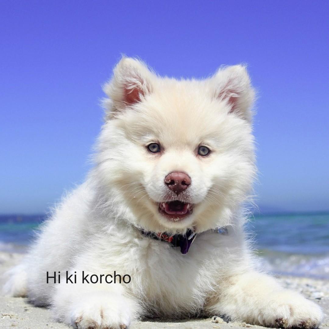 কুকুর🐶 - Hi ki korcho - ShareChat