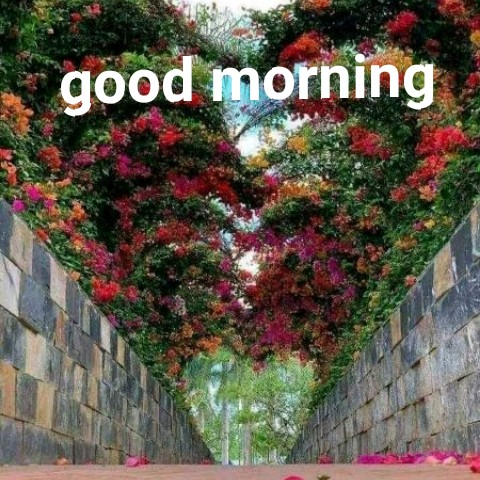 GIFS - good morning - ShareChat