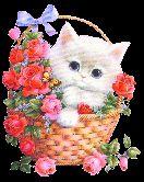 Cat Wallpaper - ShareChat