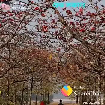 🍏Fruits - ShareChat