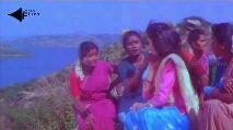 love bird's 🕊️🕊️ - kothari ms KothariFilms kothari Kothari Films Subscribe - ShareChat