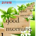 🎥WhatsApp वीडियो - 21 / 11 / 18 moening a good morning good morning que morning  - ShareChat