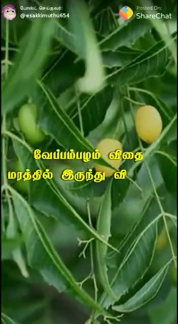 🤔தெரிந்து கொள்ளுவோம் - போஸ்ட் செய்தவர் : @ esakkimuthu 654 Posted On : ShareChat ' நீங்க வேப்ப மரத்துக்கு பக்கத்துல ' போகுறப்போ , உங்களால முடிஞ்சா ' வேப்பம்பழங்களை கையில எடுத்துக்குங்க . அதை சாலை ஓரங்களிலும் , எரி , குள் கரையோரங்களிலும் போகுறப் ' போக்குல போட்டு விட்டு போங் போஸ்ட் செய்தவர் : @ esakkimuthu 654 Posted On : ShareChat அடுத்த தலைமுறைக்கு நாம் செய்யும் உதவி . . SUBSCRIBED A - ShareChat