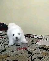 dog lover's - ShareChat