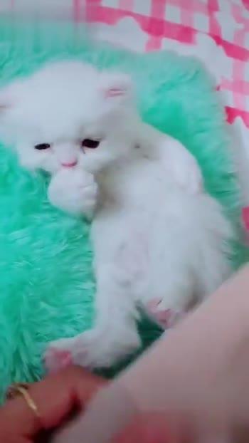 cat lover🐈 - ShareChat