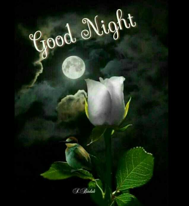 alva friends... - Good Night L . Budak - ShareChat