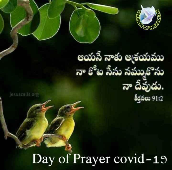 amen amen - CHUK ఆయనే నాకు ఆశ్రయము నా కోట నేను నమ్ముకొను నా దేవుడు . కీర్తనలు 91 : 2 jesuscalls . org Day of Prayer covid - 19 - ShareChat