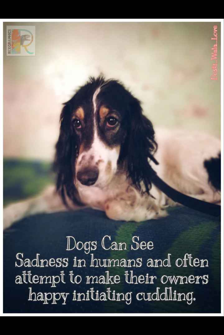 animal lovers - REXGRAPHICS Dosti _ Wala _ Love Dogs Can See Sadness in humans and often attempt to make their owners happy initiating cuddling . - ShareChat