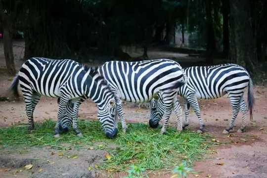 animals - யா வைOA - ShareChat