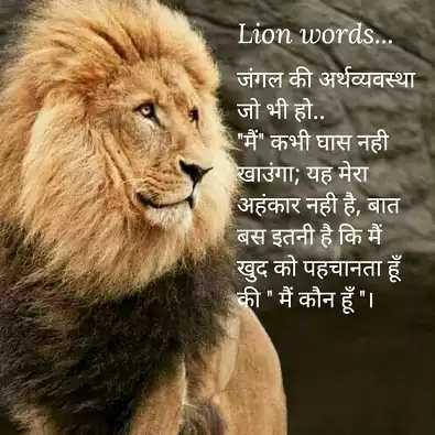 😍 awww... 🥰😘❤️ - Lion words . . जंगल की अर्थव्यवस्था जो भी हो . . मैं कभी घास नही खाउंगा ; यह मेरा अहंकार नहीं है , बात बस इतनी है कि मैं खुद को पहचानता हूँ की मैं कौन हूँ । । - ShareChat