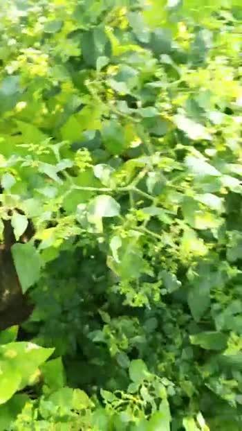 🌹फुलांचे व्हिडीओ चॅलेंज - ShareChat