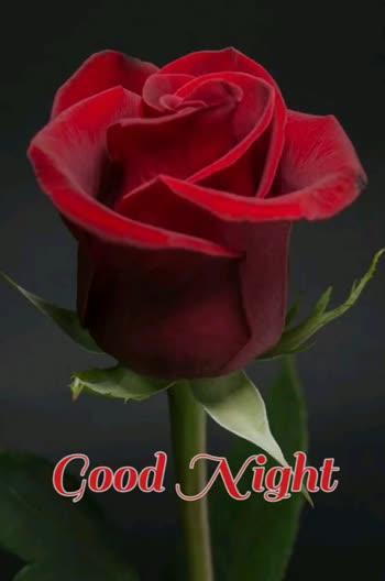 😴శుభరాత్రి - Srinu Good Night Good Night - ShareChat