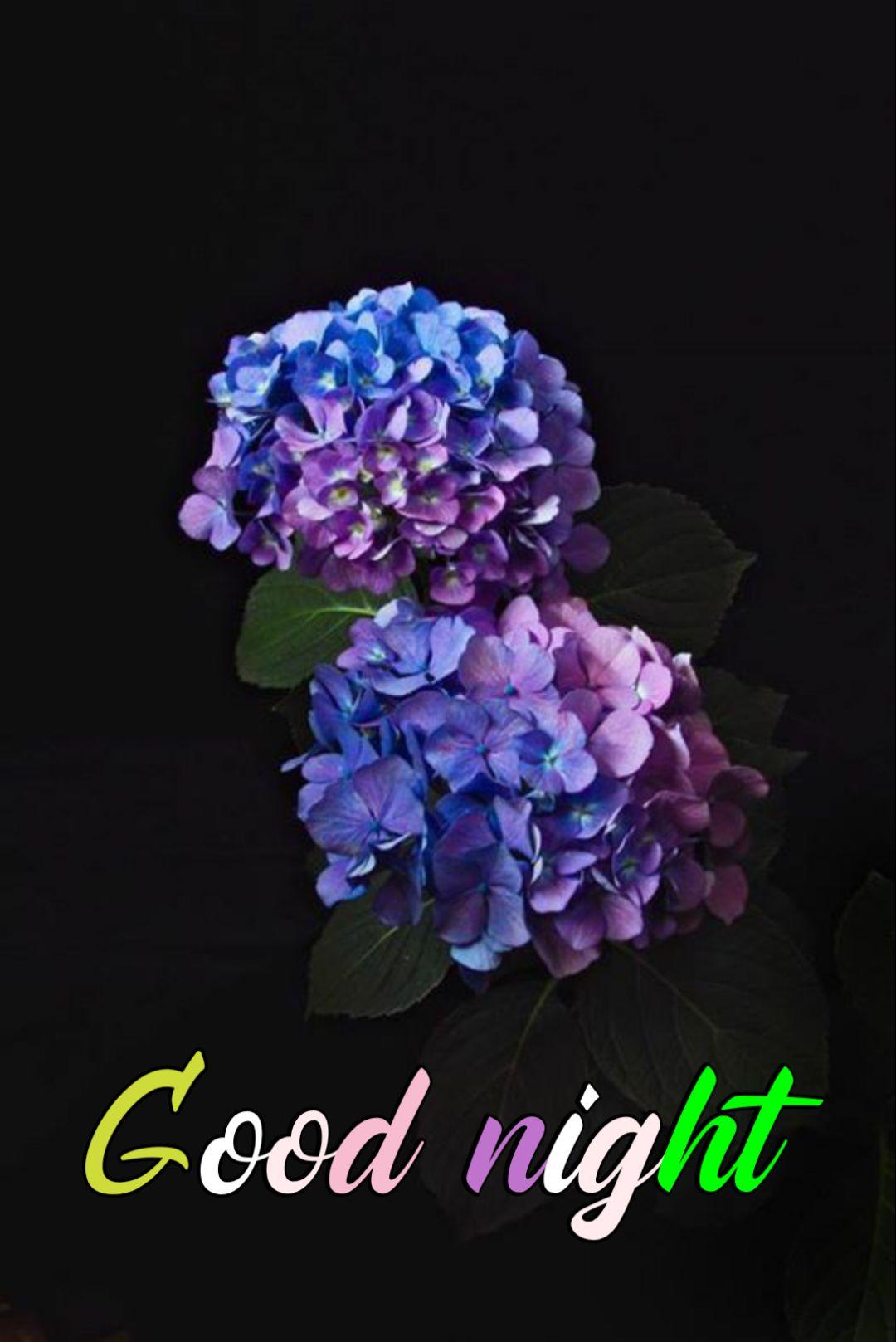 💖ശുഭരാത്രി സുഖനിദ്ര - Good night - ShareChat