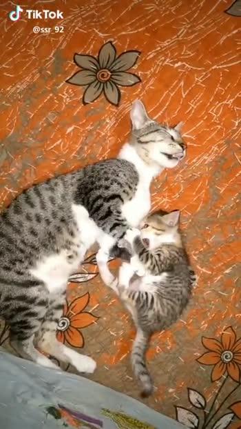 cat lovers - @ ssr _ 92 J Tik Tok @ ssr _ 92 - ShareChat