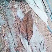 வசந்த காலத்தில் சோலையாக மாறிய பாலை நிலம் - ShareChat