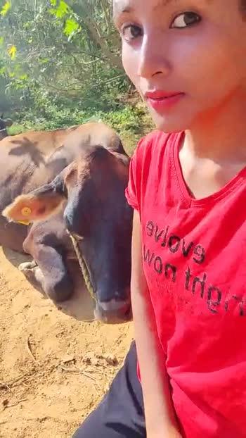 ಗೋ ಹತ್ಯೆ ನಿಷೇಧ - ShareChat