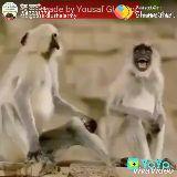 ❤bristi❤ - ShareChat