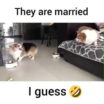 🐕 செல்ல பிராணிகள் - They are married I guess y They are married I guess I - ShareChat