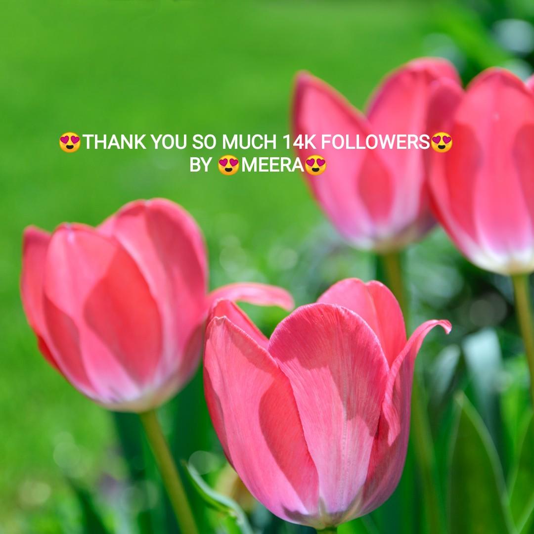 📜கவிதை📋 - OOTHANK YOU SO MUCH 14K FOLLOWERSOS BY OG MEERA - ShareChat