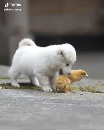 pet lovers - Tik Tok @ shekar _ sandy Tik Tok @ shekar _ sandy - ShareChat
