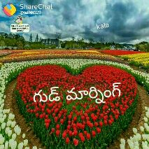 nagachitanya and samantha 1st anniversary - Sobning Have a nice Day @ 9469708 ShareChat օտ : Սավ Share chat « Թ846833 kala Have a mobila - ShareChat