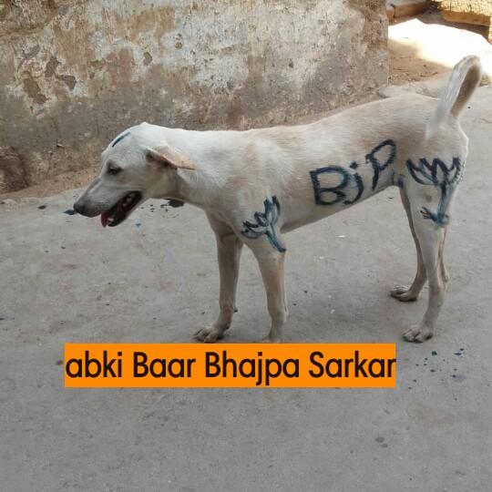 🇮🇳 देश के जाबाज़ों को सल्यूट - BjY abki Baar Bhajpa Sarkar - ShareChat