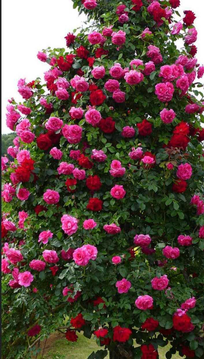 beautiful flower - ShareChat