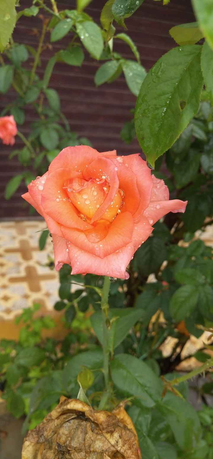 beautiful flower - ShareChat