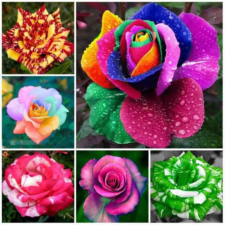 beautiful flowers - LOUPANOYANG - ShareChat