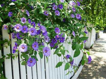 beautiful flowers - ShareChat