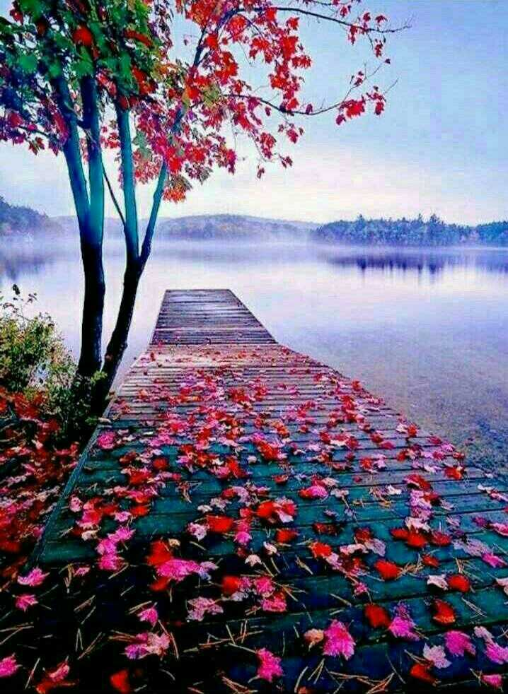 beautiful nature - ARE TER 13 NO - ShareChat