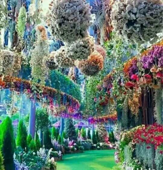 beautiful nature wallpaper 😘 - ShareChat
