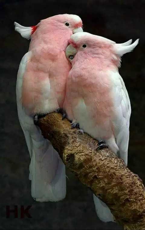 beautyfull birds - НК - ShareChat
