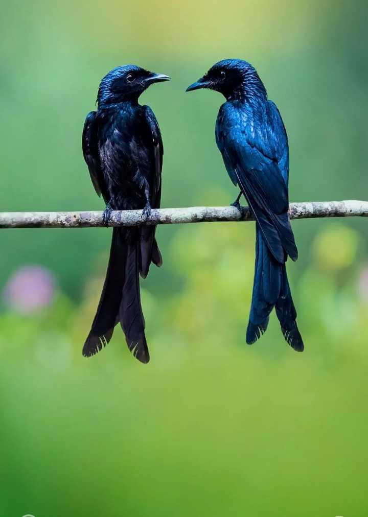 beautyfull birds - ShareChat