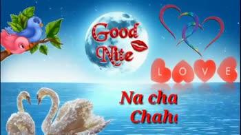 good 🌹🌹night🌙⏰💤💤 - Good Nite Quan Tribe Ongel Spel DOVE Na taron ki Farmaish . . . Please Like , Share & Subscribe Good Nite DOVE Bas yehi meri Khuwaish . - ShareChat