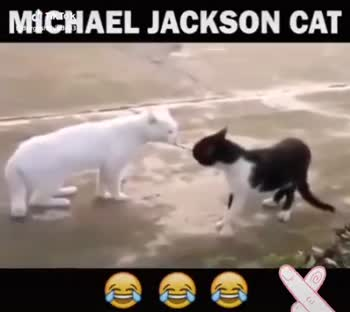 🕺happy international dance day💃🏽 - MICHAEL JACKSON CAT MICHAEL JACKSON CAT Tok duende83 - ShareChat