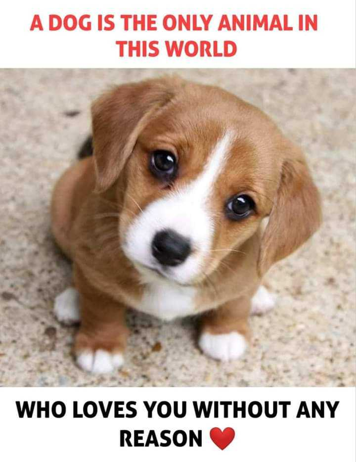 bhai hai tu mera😉 - A DOG IS THE ONLY ANIMAL IN THIS WORLD WHO LOVES YOU WITHOUT ANY REASON - ShareChat