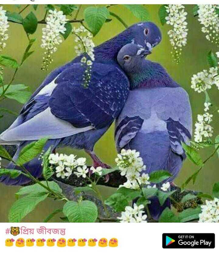 #bird# - ই - | # প্রিয় জীবজন্তু GET IT ON Google Play - ShareChat