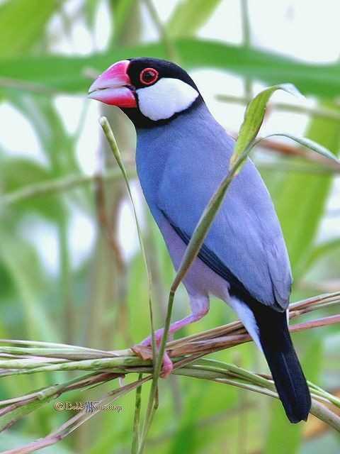 #bird# - @ IG . - ShareChat