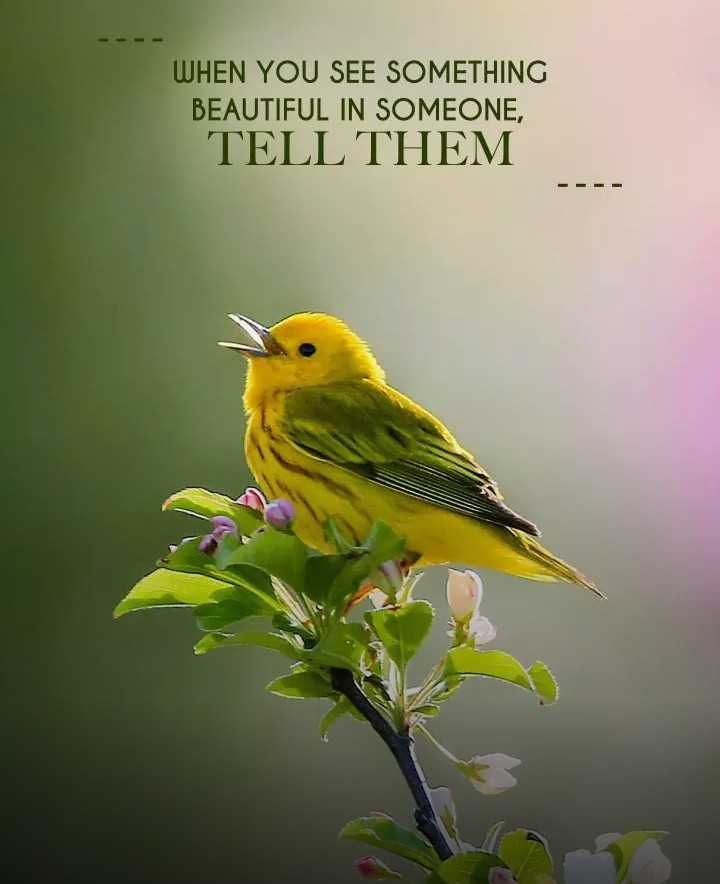 birds - WHEN YOU SEE SOMETHING BEAUTIFUL IN SOMEONE , TELL THEM - ShareChat