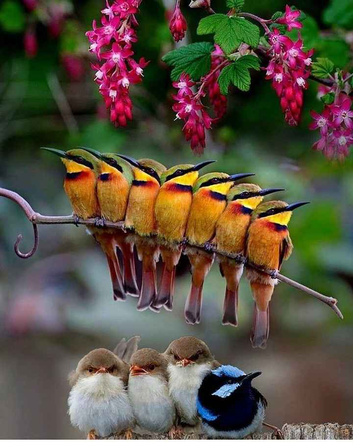 birds phography - ShareChat