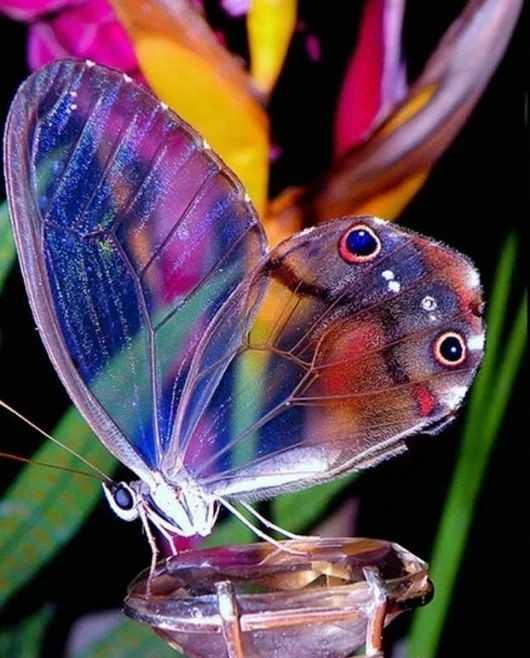 butterfly - ShareChat
