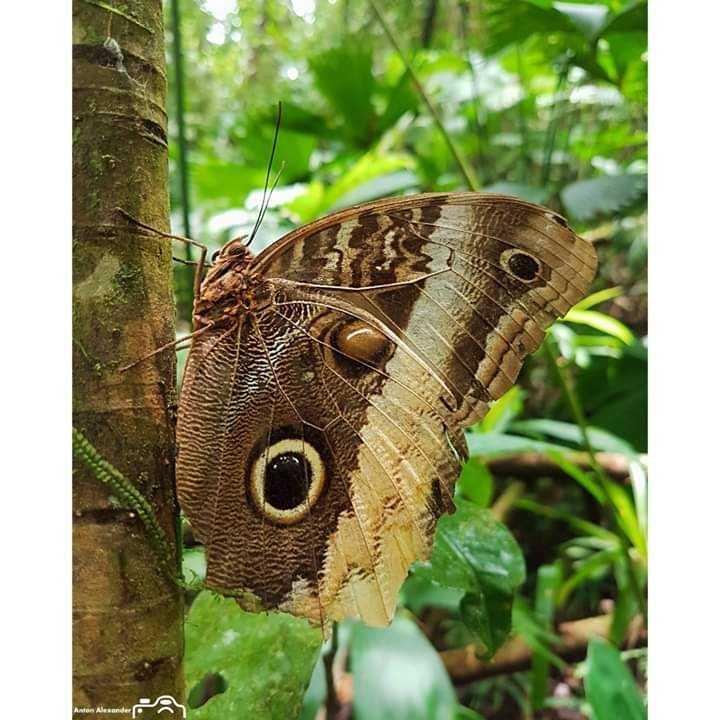 butterfly - Anten Alexander - ShareChat